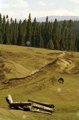 Yusmarg ,  Meadow of Jesus Christ ,  Kashmir ,  India.